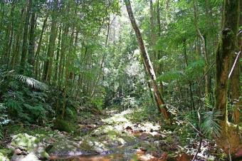 Národní park Paluma, severní Queensland. Kredit: volně dostupné / www.gondwananet.com.