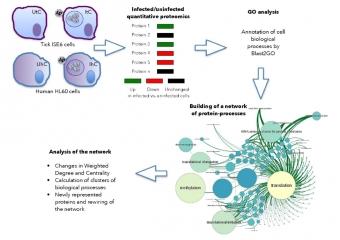Využití teorie grafů při analýze odpovědi lidských proteinů a proteinů klíšťat na infekci anaplazmy. Kredit: Estrada-Peña et al. (2018).