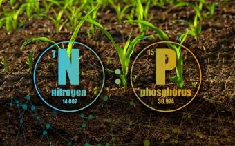 Dusík a fosfor jsou klíčové živiny pro rostlinstvo. Kredit: Čapek et al. (2018)