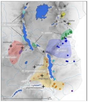 Rozšíření rypošů v subsaharské Africe. Kredit: Bryja et al. (2018) Mammalian Biology.