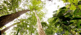 Prales v Khao Bunthad Wildlife Sanctuary, Thajsko. Kredit: Satun Geopark.