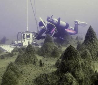 Pilíře mechů na dně antarktického jezera. Kredit: Dale Andersen, SETI Institute.