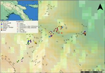 Místa sběru vzorků na Papui-Nové Guineji. Kredit: Souto‐Vilarós et al. (2019), Molecular Ecology.