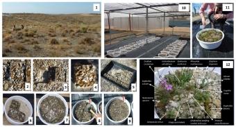 Experiment s monolity společenstva. Kredit: Peralta et al. (2019) Journal of Ecology.