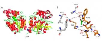 Struktura celého enzymu DmxA (vlevo) a jeho aktivního místa (vpravo). Kredit: Chrást et al. (2019), Microorganisms.