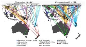 Rozšíření parazitů ve studovaných oblastech. Kredit: Clark et al. (2017), Diversity & Distributions