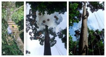 Výzkum mravenců v tropickém lese. Kredit: Yusah et al. (2018), PeerJ.