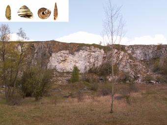 Opuštěné vápencové lomy jsou obývány mnoha druhy plžů.