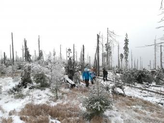 Cesta na trvalou výzkumnou plochu na Šumavě pár týdnů po větrné kalamitě – povodí Čertova jezera (r. 2017).